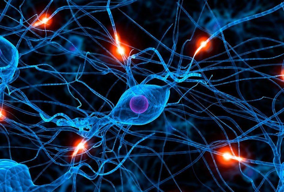 Aprender idiomas de forma intensiva faz o cérebro crescer