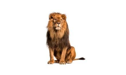 Porque o símbolo do Imposto de Renda é um leão?