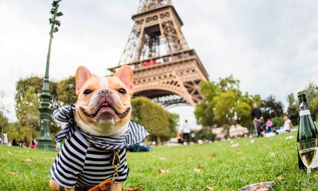Francês: Les animaux (Animais)
