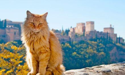 Espanhol: Los animales de compañia (Animais de estimação)