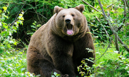 """Qual a origem da expressão """"amigo urso"""""""