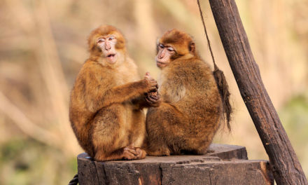 Macaco velho não põe a mão em cumbuca
