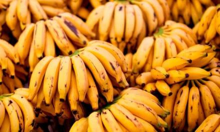 "A origem da palavra ""Banana"""