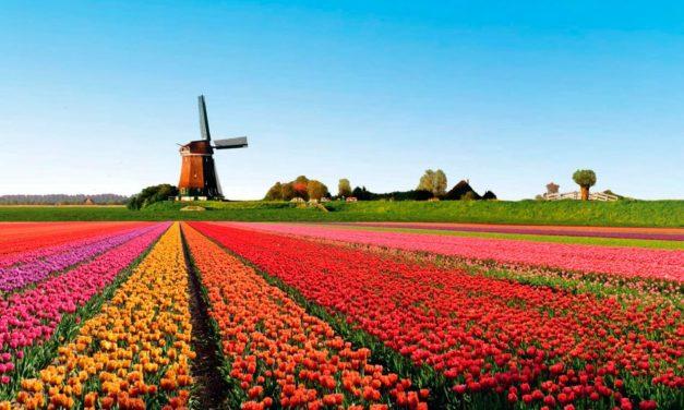 Aprenda holandês e percorra novos caminhos