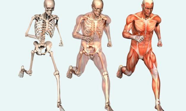 Francês: Le corps humain (O corpo humano)